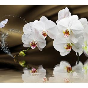 Белые орхидеи с бабочкой
