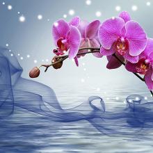Волшебная орхидея