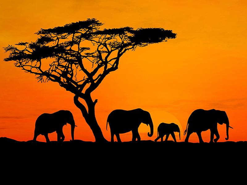 Африка на закате 2365
