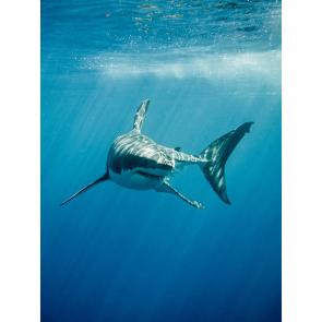 Акула 5569