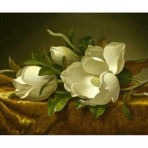 Белый акварельные цветы