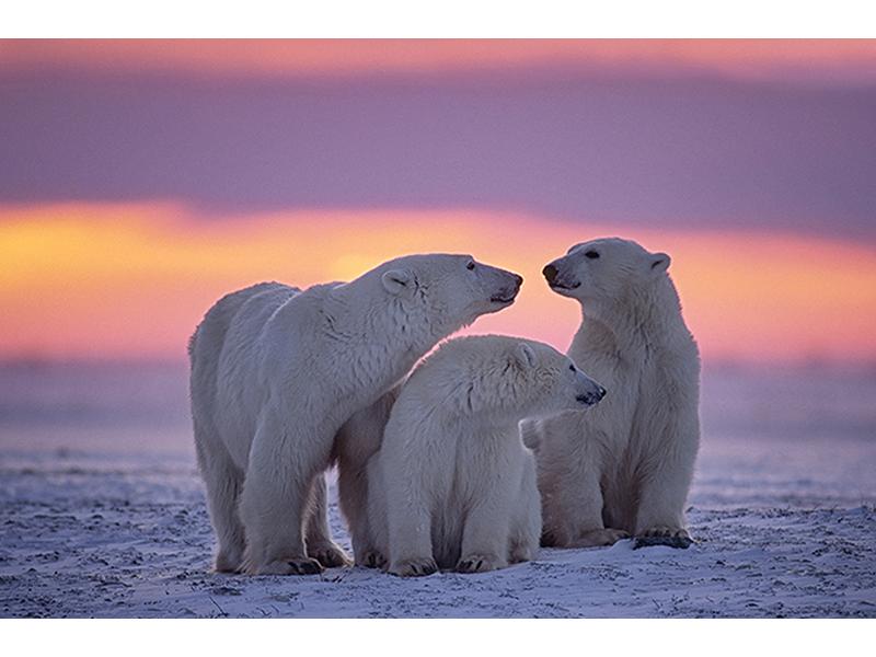 Арктика 2366