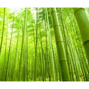 Бамбук 5124