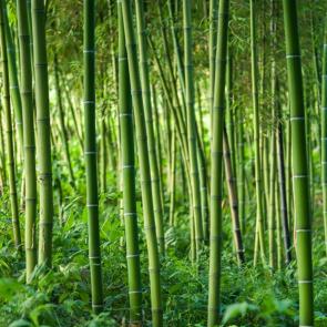 Бамбук 5128