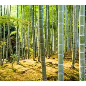 Бамбук 5134