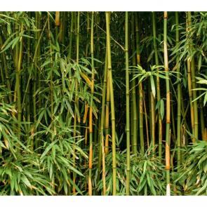 Бамбук 5135