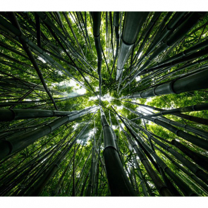 Бамбук 5138