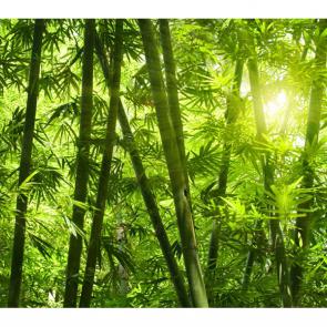 Бамбук 5150