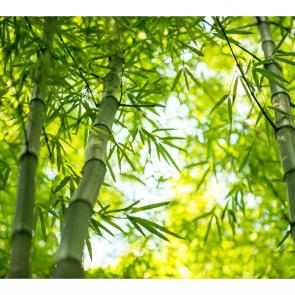 Бамбук 5151