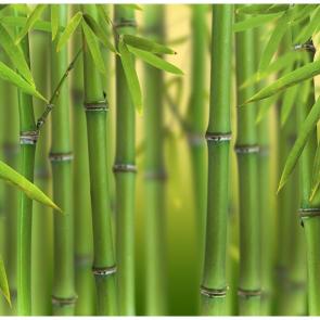 Бамбук 5152