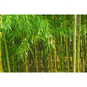Бамбук 5154