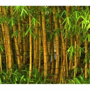 Бамбук 5155