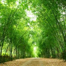 Бамбуковая арка