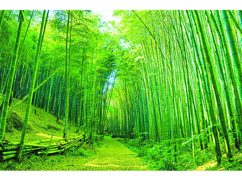 Бамбуковая тропа 1973