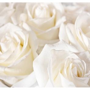 Красивые розы 3
