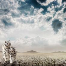 Белые тигрята