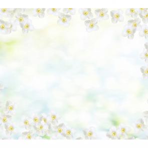 Белый жасмин