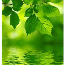 Близость листвы