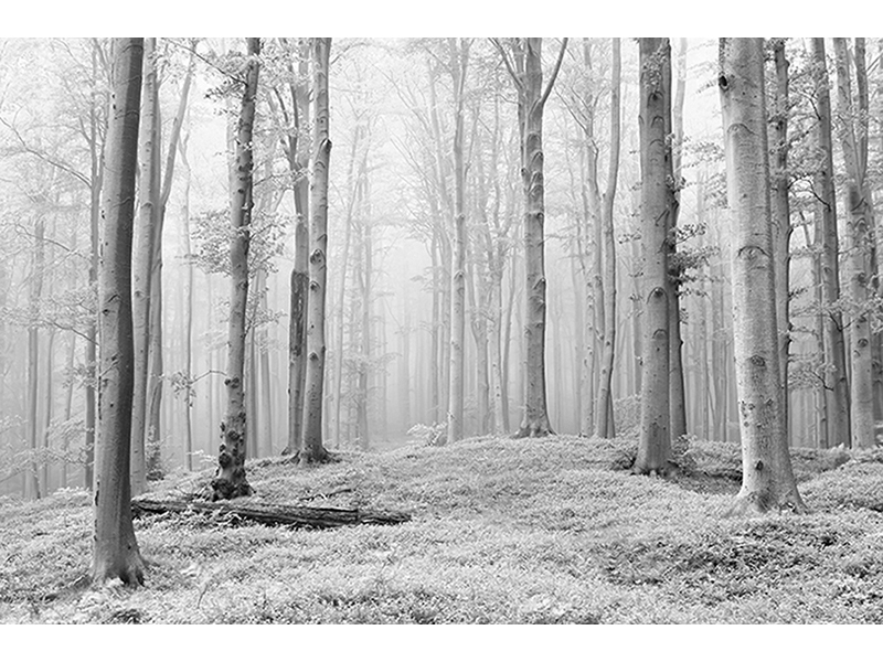 Белый лес 1929