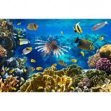 Царство на коралловом рифе 2