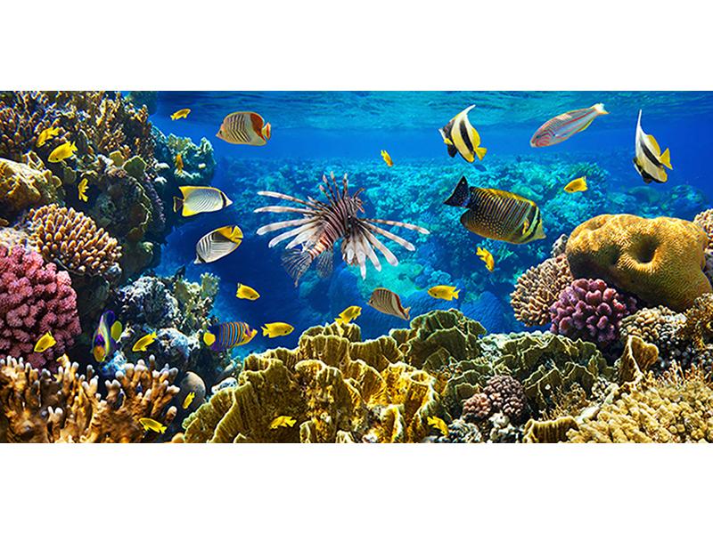 Царство на коралловом рифе 2 2460