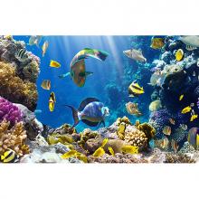 Царство на коралловом рифе