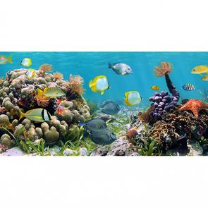 Царство на коралловом рифе 3