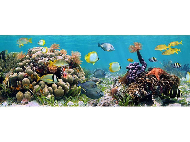 Царство на коралловом рифе 3 2462