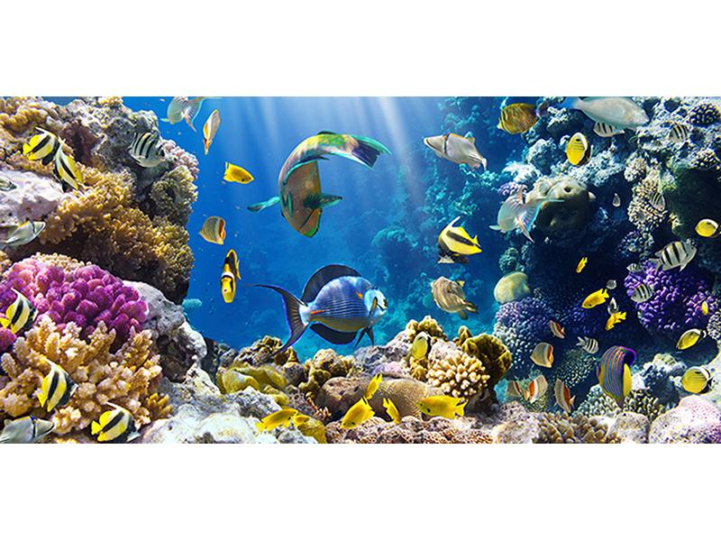 Царство на коралловом рифе 2461