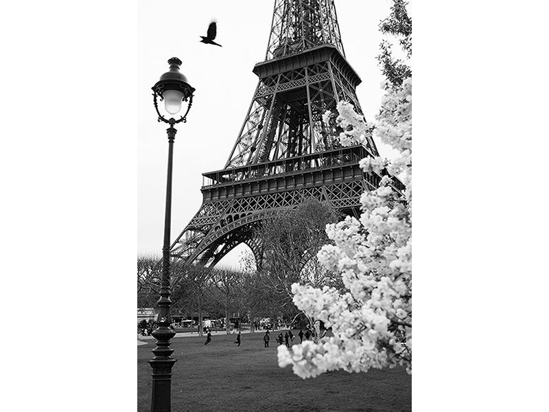 Черно-белый Париж 1031