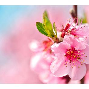 Цветение в мае