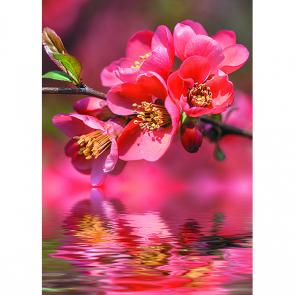 Цветок у воды