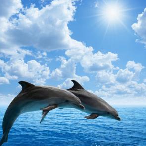 Дельфины 5571