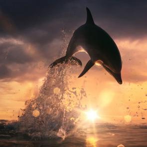 Дельфины 5572