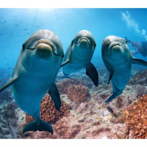 Дельфины 5573