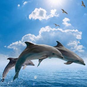 Дельфины 5577