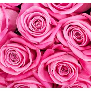 Дивные розы