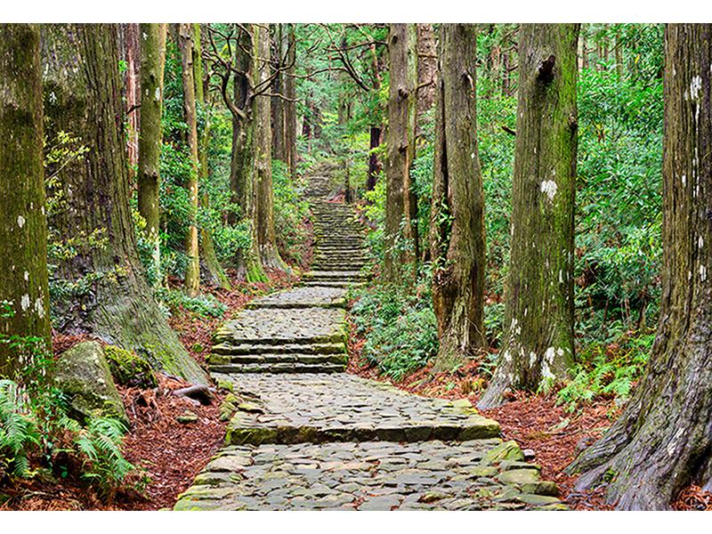 Дорожка в лесу 1740