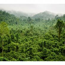 Фотообои джунгли 11224
