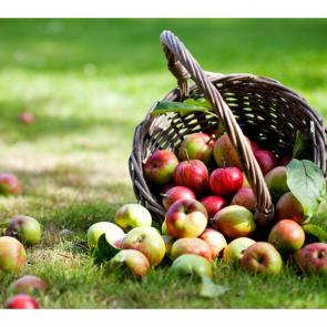 Еда фрукты 08517