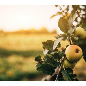 Еда фрукты 11111