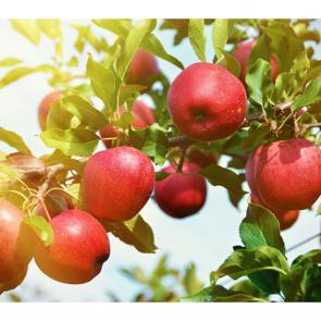 Еда фрукты 11112