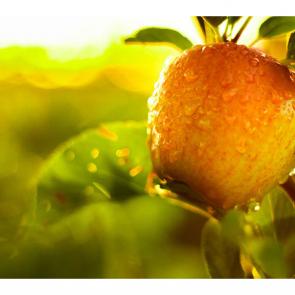 Еда фрукты 11113
