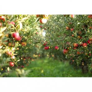Еда фрукты 11115