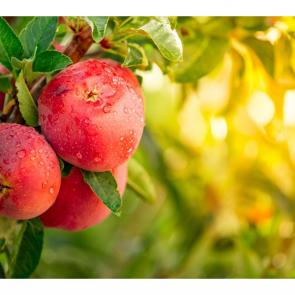 Еда фрукты 11116