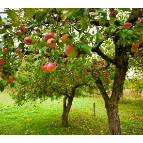 Еда фрукты 11120