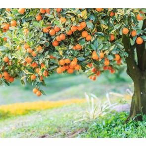 Еда фрукты 13536
