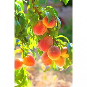 Еда фрукты 13749