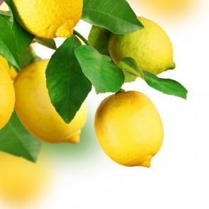 Еда фрукты 14020