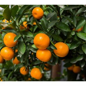 Еда фрукты 14811